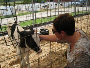 Woman petting a calf